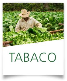 Ficha Tabaco