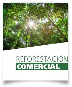 Ficha Reforestación comercial