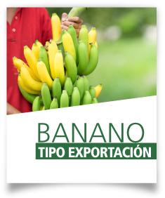 Ficha Banano tipo exportación