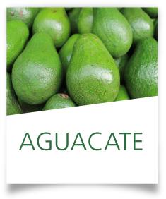 Ficha Aguacate