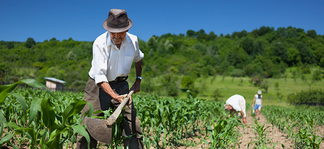 El Seagropecuario Es Un Instrumento Para Incentivar Y Proteger La Produccion De Alimentos Busca El Mejoramiento Economico Del Sector Rural